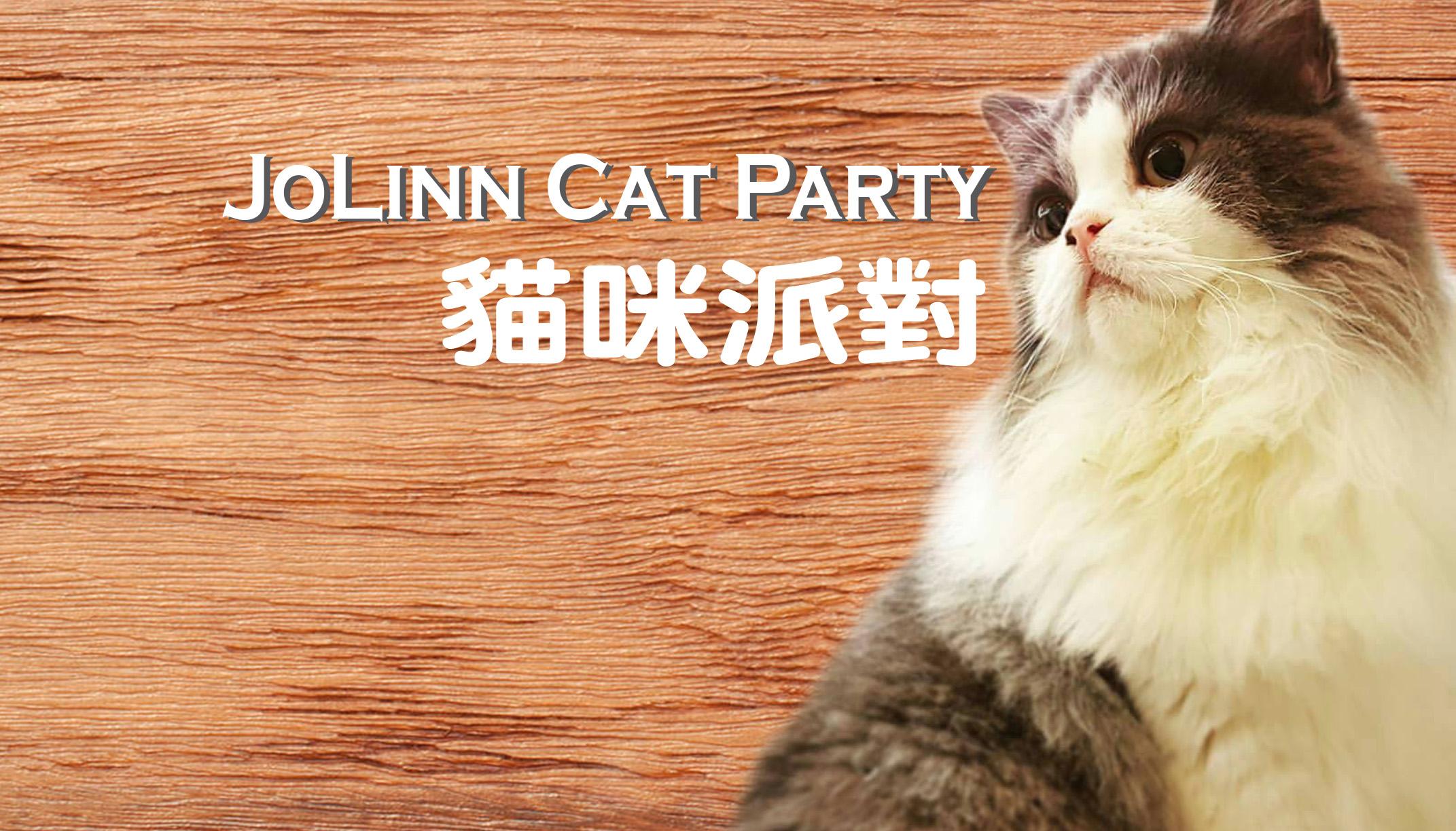 嚴選合法寵物店-貓咪派對