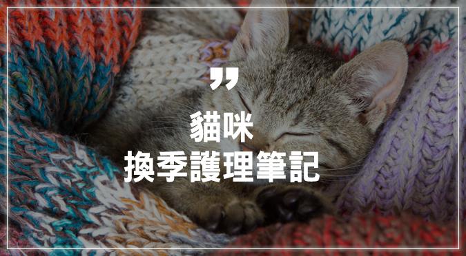 貓咪換季健康護理筆記