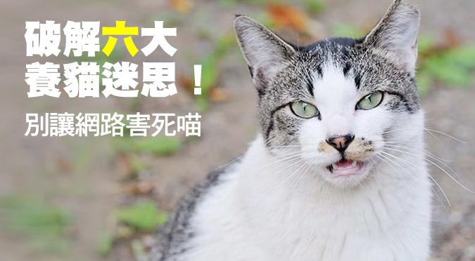 破解六大養貓網路謠言!
