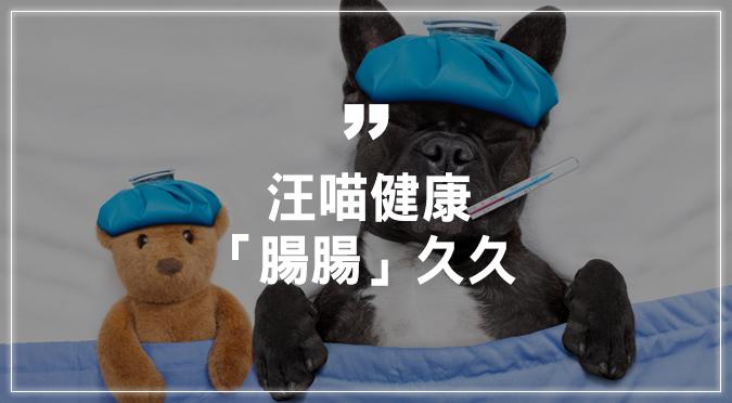 寵物毛小孩健康-腸胃篇