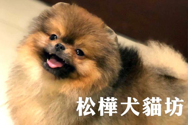 嚴選合法寵物店-松樺犬貓坊