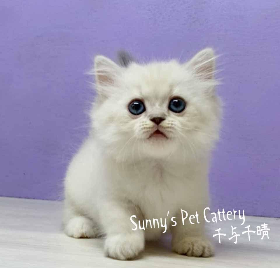 千晴寵物坊/小步舞曲