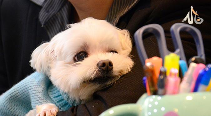 """【寵物保險】毛爸毛媽們都應該了解的""""寵物保險"""""""