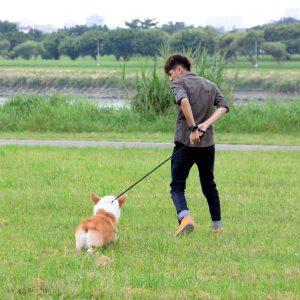 養狗增加運動量
